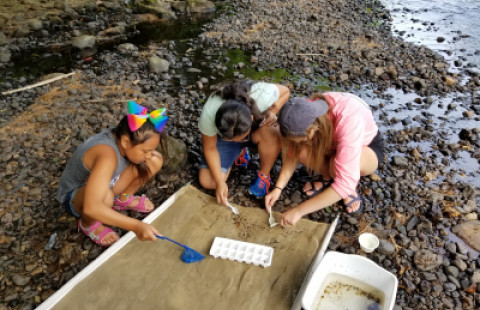students on rocky beach conducting investigation